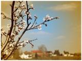 Mandelblüte vor der Haustür – Kleine Familienwanderung auf dem PfälzerMandelpfad
