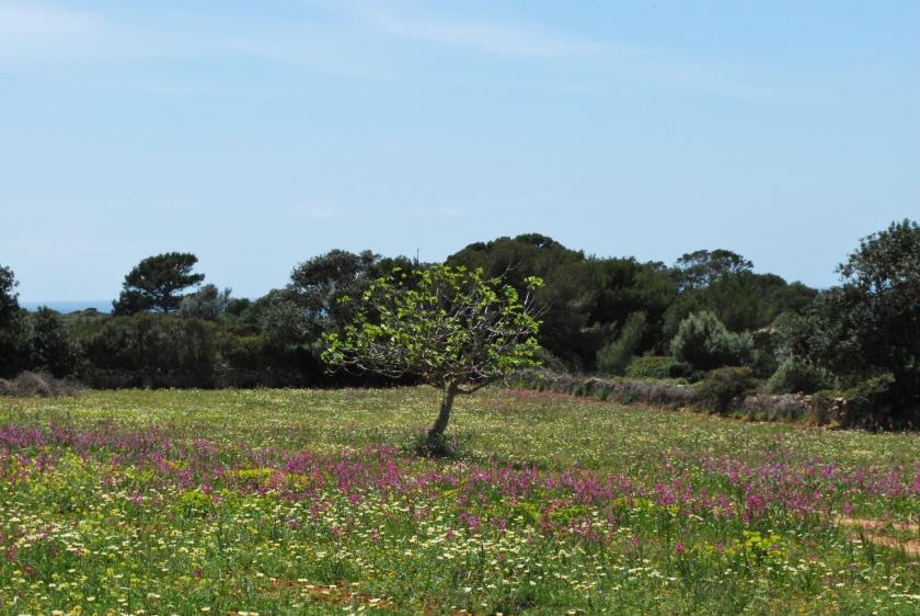 Mallorca_Santanyi_Landschaft